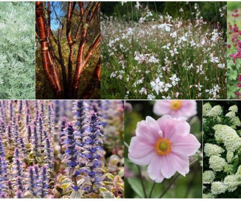 Garden design Wiltshire