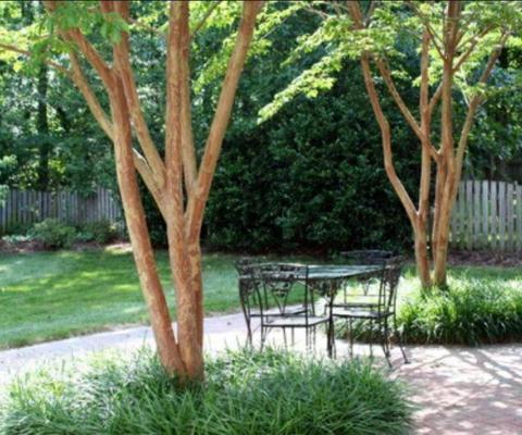 Multistem communal gardens