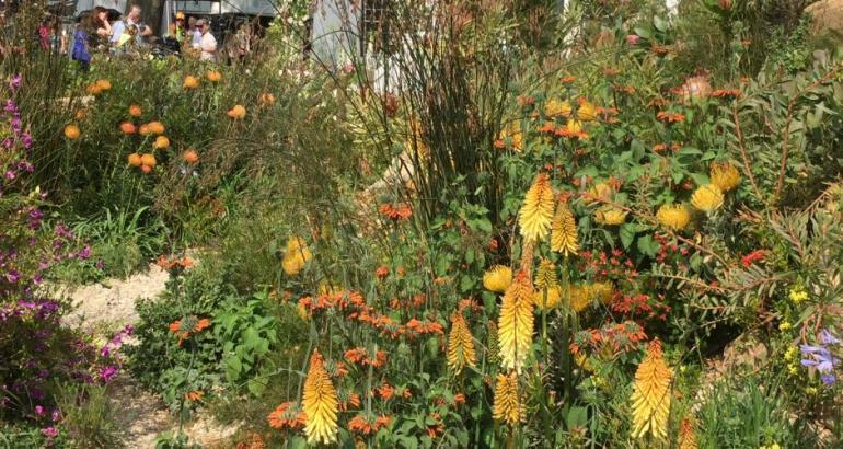 garden design dorset