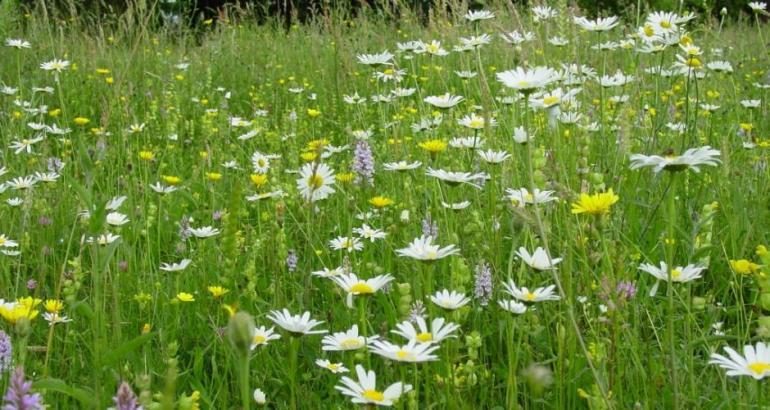 british native wildflowers