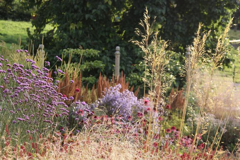 Swathes of grasses and perennials