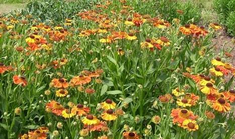 Wiltshire country garden