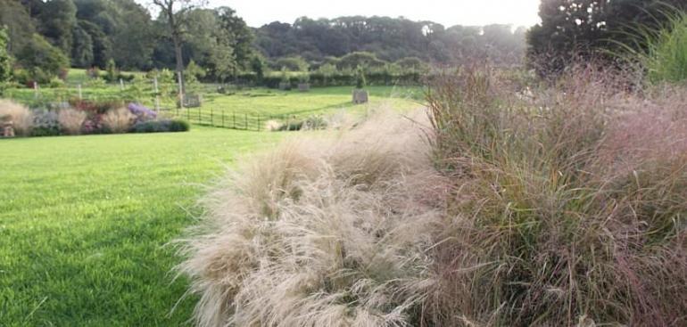 Stipa tenuissima catches the breeze