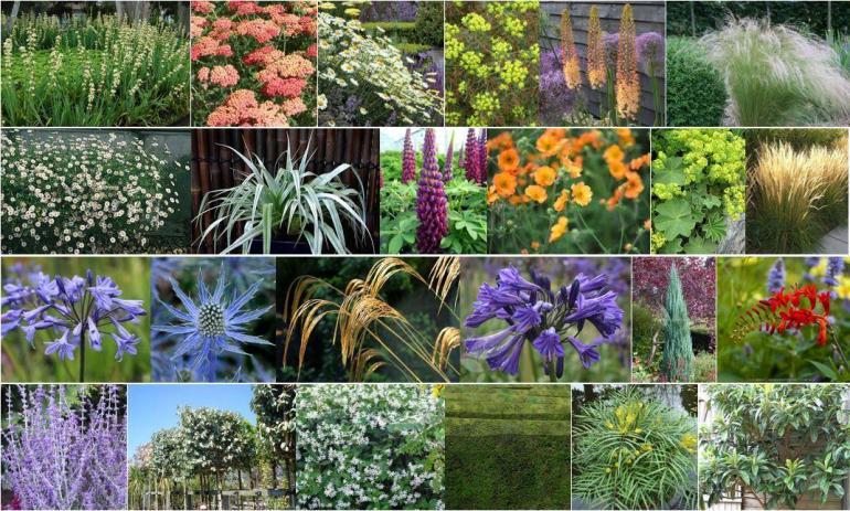 Poole garden plants